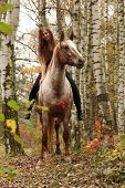 stock photo of appaloosa  - Pretty young girl riding a horse without any equipment in nice forest