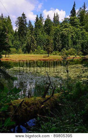 Fallen Log Near Pond
