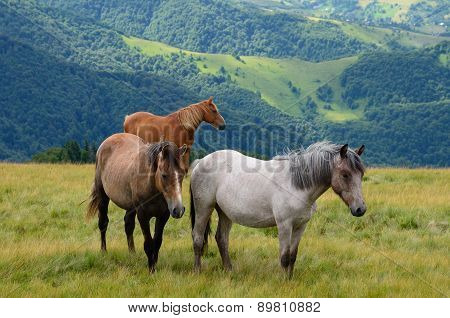 Three Horses In Mountains