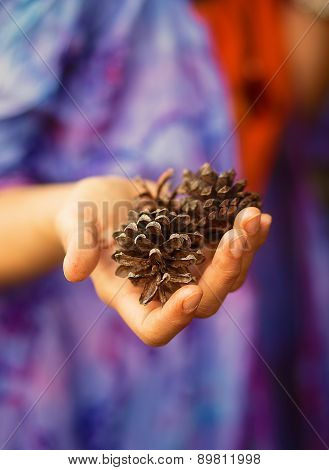 Fir-cone In Woman Hand, Ecology Concept