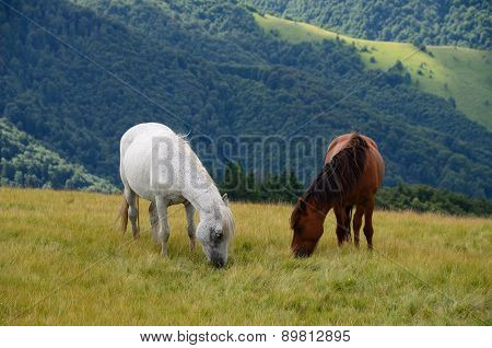 Two Feeding Horses In Mountains