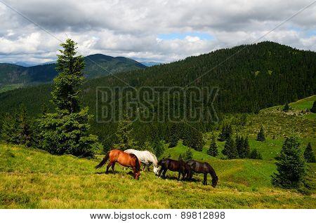 Grazing Four Mountain Horses