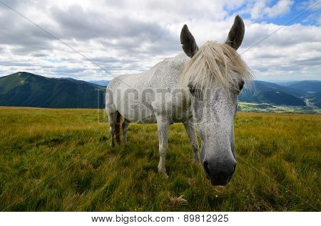 Single Horse Close Up