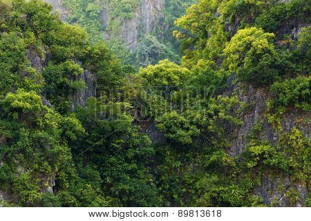 Rainforest on rocky cliff in the Halong bay, Vietnam