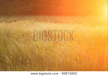 Field at sunset, sunset on meadow. Grass in the sunlight background. Summer, autumn, fall season landscape. Summertime, autumntine sun scene. Backlit.