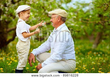 Happy Grandson, And Grandpa Having Fun In Spring Garden, Blowing Dandelions