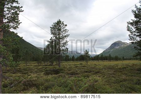 Landscape in one of the Norway National park.