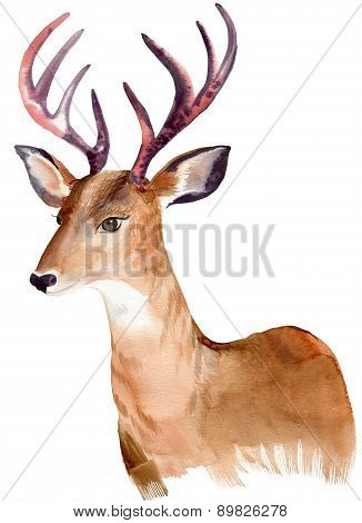 Watercolor Portrait Of A Deer