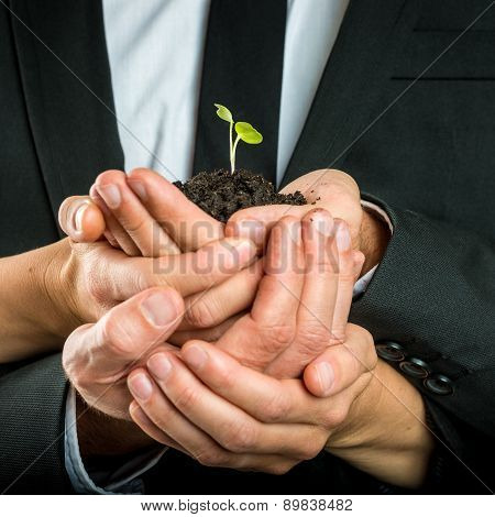 Cupped Hands United To Protect A Green Sprout
