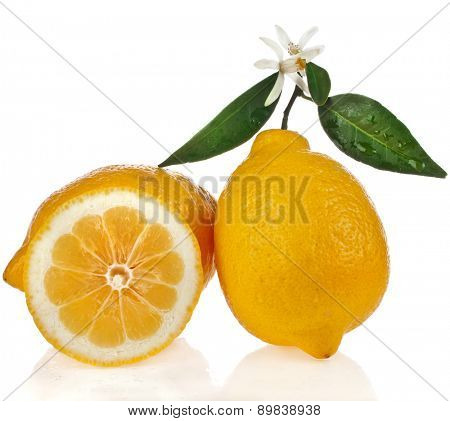 Beautiful citrus lemon with sli?e close up isolated on white background