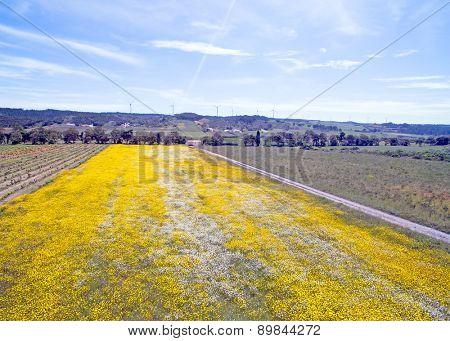 Aerial spring landscape in Portugal