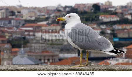 Portugal. Porto City. The Seagull On The Background Of The Aerial View Over The Porto