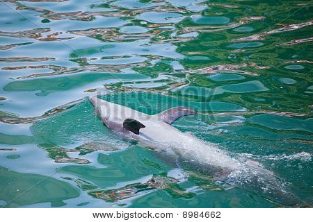 Dolphin Doing Tricks