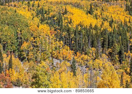 Colorado Mountain Scenic in Fall