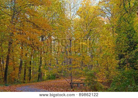 A trail covered by fallen leaves and deciduous trees in autumn.