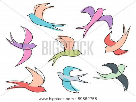 Graceful colorful flying swallow  birds