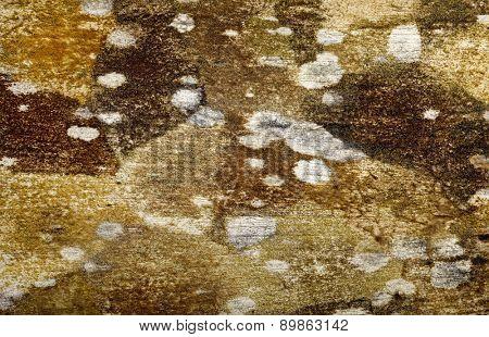 fungus texture