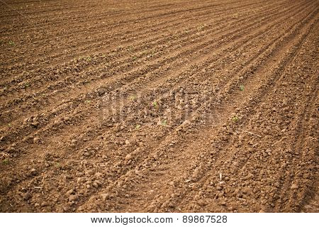 Agricultural Field, Arable Land Soil