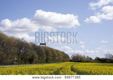 Bridge And Rapefield