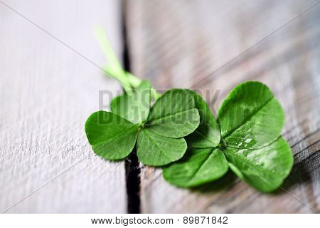 Green clover leaves on wooden background