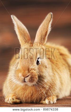 Little rabbit on wooden background