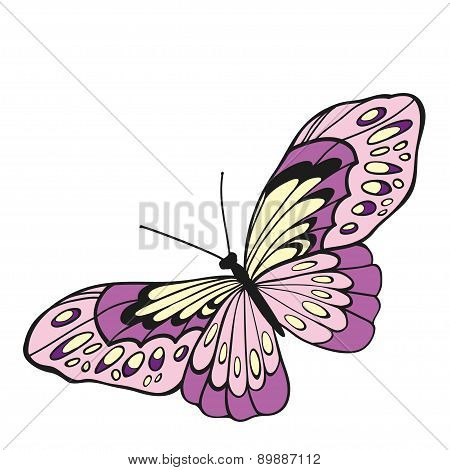 Pink Butterfly With Open Wings In A Top View..
