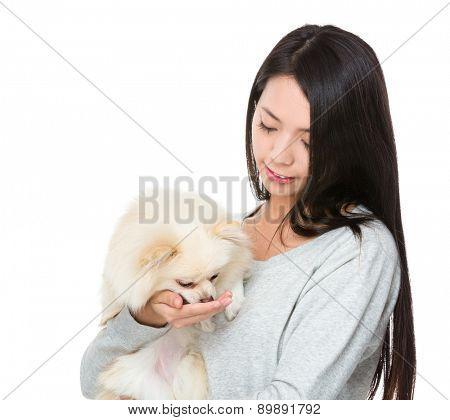 Woman feed her pomeranian dog