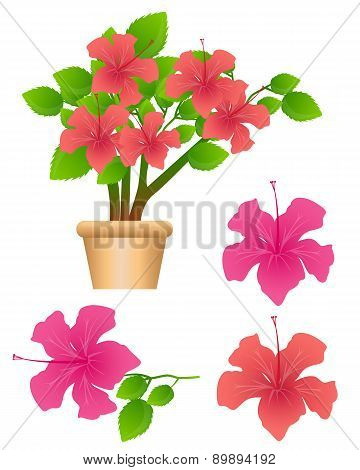 Tropical flowers Hibiscus isolated on white background. Vector illustration