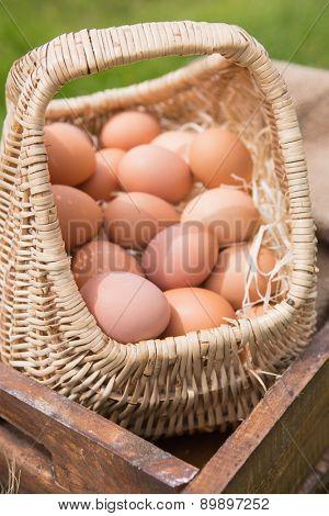 Basket of fresh organic eggs on a sunny day