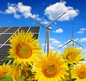 picture of wind energy  - Solar energy panels with wind turbines in sunflower field - JPG