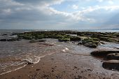 stock photo of tide  - Incoming tide coming in over green seaweed covered rocks and rock pools at Exmouth beach with sea and further coastline in distance - JPG