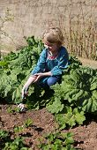image of strawberry plant  - Pretty young girl planting strawberry plants in a garden - JPG