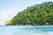 stock photo of siamese  - Tropical forest - JPG