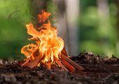 stock photo of bonfire  - Bonfire in spring forest - JPG