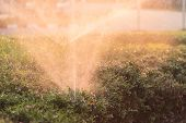 picture of sprinkler  - Close up sprinkler and watering in the garden - JPG