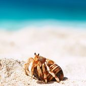 picture of crab  - Hermit crab on beach at Seychelles - JPG