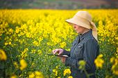 picture of cultivation  - Female Farmer using Digital Tablet Computer in Oilseed Rapeseed Cultivated Agricultural Field Examining and Controlling The Growth of Plants - JPG