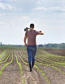 picture of hoe  - Rear view of young farmer carrying hoe on shoulders in corn field in spring - JPG