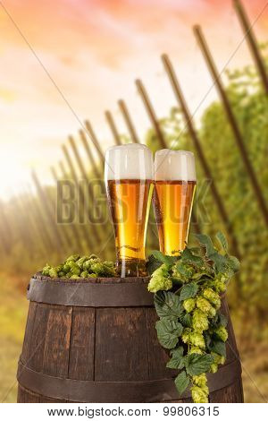 Beer glass served on wooden desk with keg. Hop-field on background