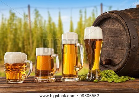 Beer glasses served on wooden desk with keg. Hop-field on background