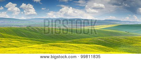 Panoramic background of beautiful yellow-green floral canola field with blue sky and clouds - sunny day