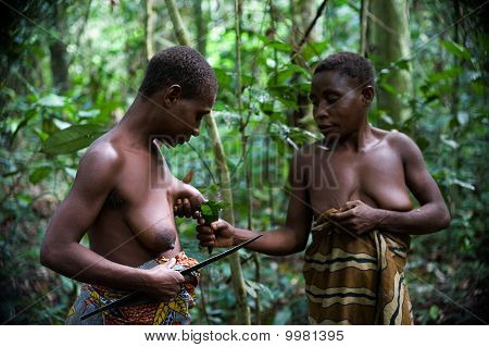 Women Of A Tribe Of Pygmies Prepare A Medicine From A Malaria.