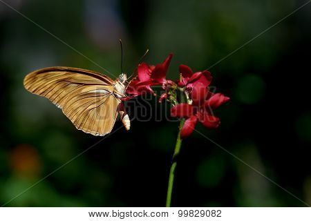 Beautiful Butterfly On The Flower