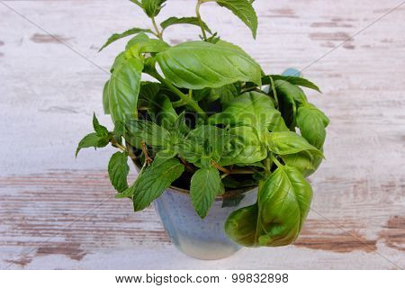 Bunch Of Fresh Mint And Basil In Cup On Old Wooden White Table
