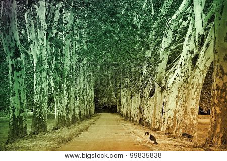 Plane Trees Alley