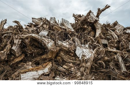 Piled Tree Stumps From Close