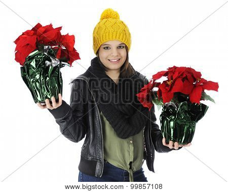 A beautiful teen girl happily carrying two pots of red poinsettias.  On a white background.