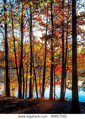 Colorful Contrasted Trees