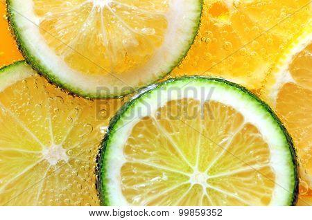 Citrus fruit macro