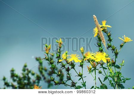 Wild Field Flower Of Yellow Color With Photoeffect